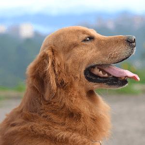 Hond voorbeeld effectief altruïsme